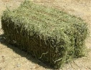 HAY BALE (SECOND CUT) LUCERNE